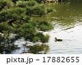 庭園 池 日本庭園の写真 17882655