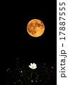 満月 秋 コスモスの写真 17887555
