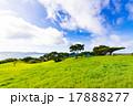 草原、緑、風景。沖縄、日本。 17888277