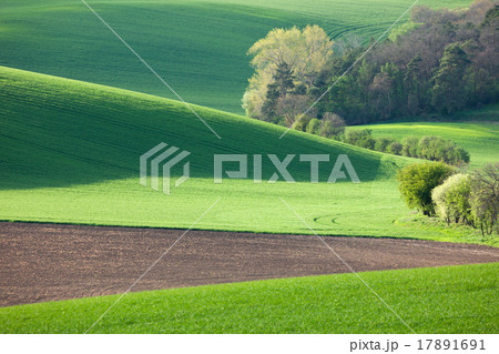 Abstract landscape of Sunny hills with green field