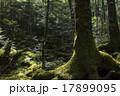 白駒の森 17899095