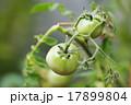 小枝 枝 ガーデンの写真 17899804