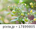 小枝 枝 ガーデンの写真 17899805