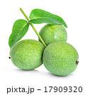 グリーン 緑 緑色の写真 17909320