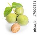 グリーン 緑 緑色の写真 17909321