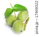 グリーン 緑 緑色の写真 17909322