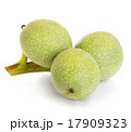 グリーン 緑 緑色の写真 17909323