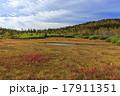栂池自然園 17911351