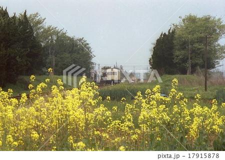 東武熊谷線と菜の花 妻沼駅(1983年4月29日) 17915878