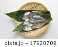 ゼンメ(ヒイラギ) 17920709