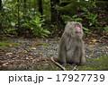 猿の視線 17927739