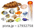 Different kind of sea animals 17932758