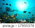 海 水中写真 スキューバダイビングの写真 17935378