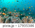 海 水中写真 スキューバダイビングの写真 17935386