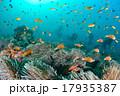 海 水中写真 スキューバダイビングの写真 17935387