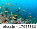 海 水中写真 スキューバダイビングの写真 17935388