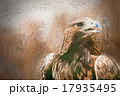 鳥 ワシ 鷲のイラスト 17935495