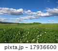 クローバーの草原 17936600