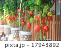 神楽坂ほおずき市の写真 17943892
