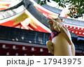 京浜伏見稲荷神社 17943975