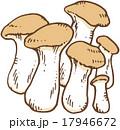エリンギ 食材 野菜のイラスト 17946672