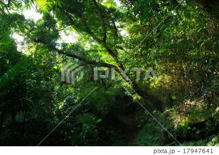 奥深い森 17947641