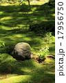 大原三千院 わらべ地蔵 新緑の写真 17956750