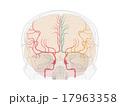 内頚動脈系の走行 17963358
