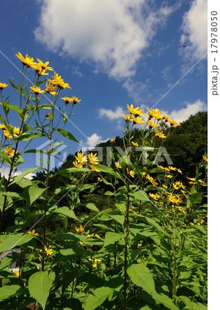長野県川上村風景 17978050