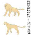 アフリカライオン 17978432