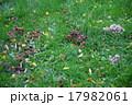 ヘルシンキの公園に生えるキノコ 17982061