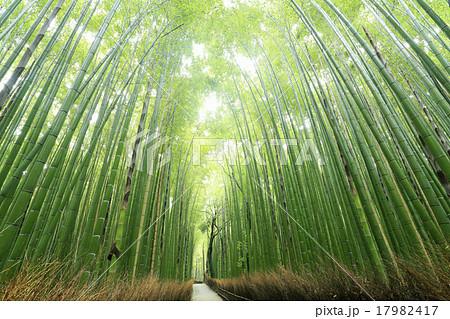 5月 新緑の竹林の道ー京都嵯峨野の散策スポット 17982417