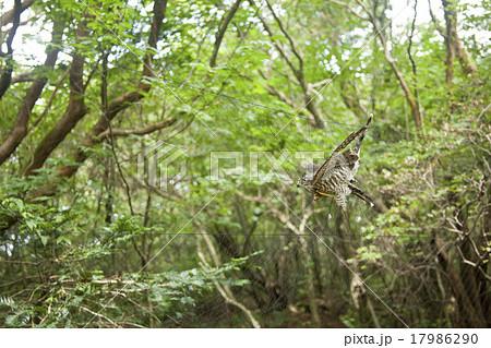 かすみ網にかかった野鳥 17986290