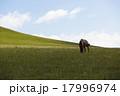 馬 午 牧草地 17996974