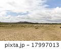 牧草地 放牧 放牧場 17997013