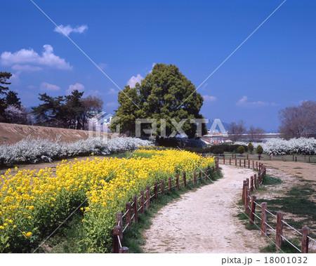 武庫川の春景色/左岸の河川敷に咲く菜の花とユキヤナギ/兵庫県西宮市 18001032