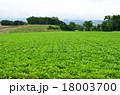 富良野の野菜畑 18003700