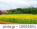 富良野の花畑 18003801
