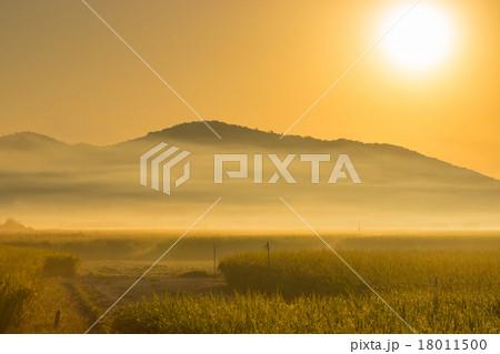 朝霧の田園風景 18011500