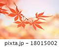 紅葉_2015501 18015002