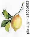 レモン 檸檬 食べ頃のイラスト 18020552