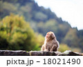 猿 ニホンザル 十二支の写真 18021490