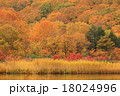 大沼 八幡平 紅葉の写真 18024996