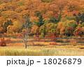 八幡平 大沼 紅葉の写真 18026879