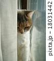 窓辺の猫 18031442