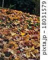 落ち葉の絨毯 18031579