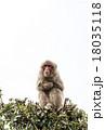 猿 18035118