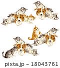 可愛いネコと犬 18043761