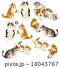 可愛いネコと犬 18043767