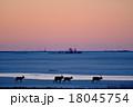 エゾシカ 朝焼け 野付半島の写真 18045754